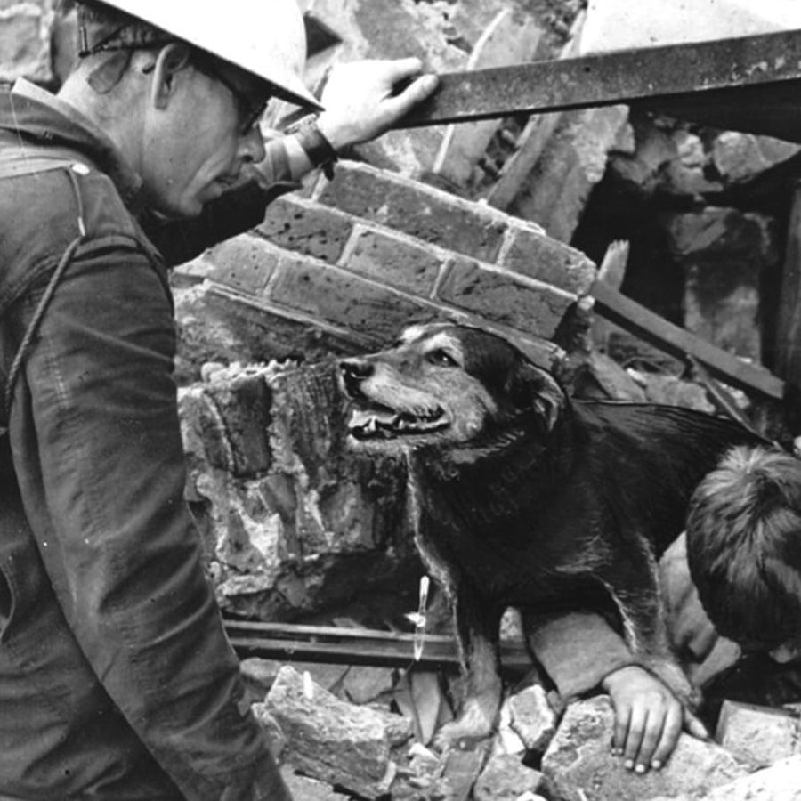 Rip the terrier who helped sniff out people during the Blitz